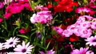 Flower Bed video