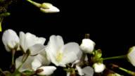 flower blooming video