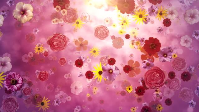 Flower blossoms (purple) - Loop video