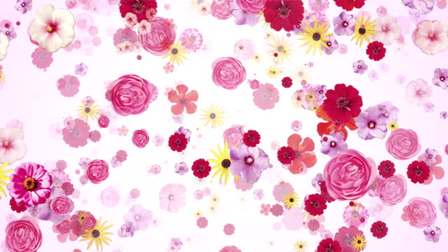 Flower blossoms (light pink) - Loop video