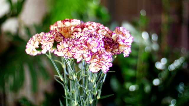 Flower bouquet in the rays of light, rotation, the floral composition consists of Carnation turkish Peach color video