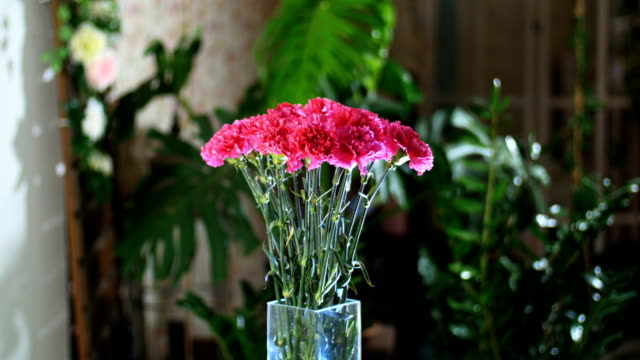 Flower bouquet in the rays of light, rotation, the floral composition consists of Bright pink turkish Carnation In the background a lot of greenery video