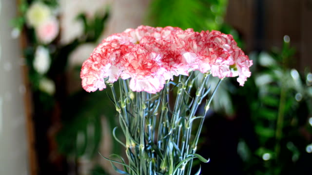 Flower bouquet in the rays of light, rotation, the floral composition consists of light pink turkish Carnation In the background a lot of greenery video