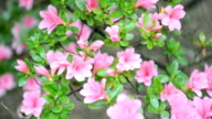 Flower Bush in Wind-Loopable video
