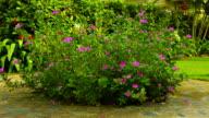 Flower bush video