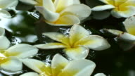 Flower display video