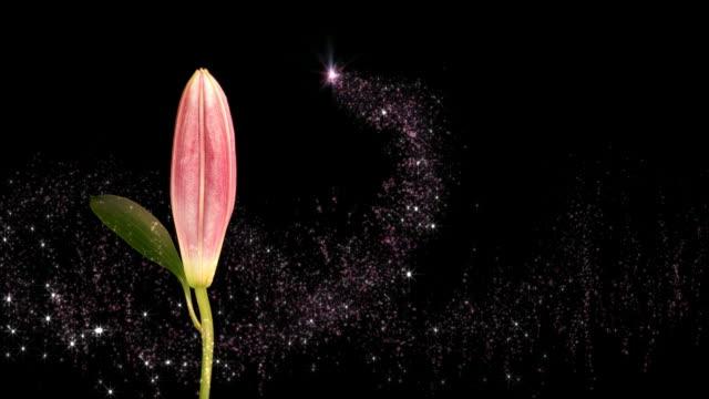 Flower Fairy video