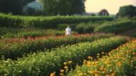 HD CRANE: Flower field video