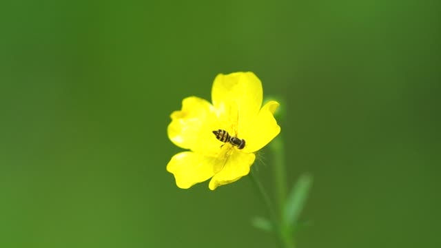flower fly and flower video