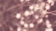flower Grass in evening light video
