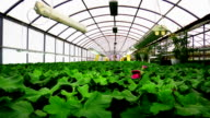 Flower greenhouse . Growing ornamental and flowers for landscape design and gifts . Green plants in pots .Dolly Shot. video
