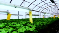 Flower greenhouse . Growing ornamental and flowers for landscape design and gifts . Green plants in pots . video