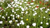 Flower in garden video