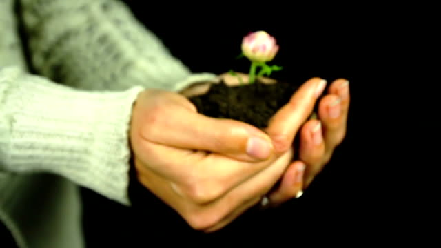 Flower in Hands Green Environment Conservation video
