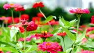 Flower in the Garden video