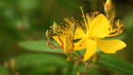 Flower Macro video
