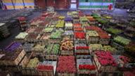 flower market of Aalsmeer video