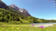 Flower meadow and lake in th mountains of alps. video