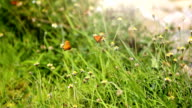 Flower Meadow in Summer with Butterfly video