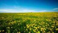 Flower Meadow video
