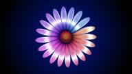 Flower opening video