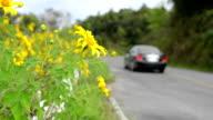 Flower street. video