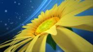 3D flower video