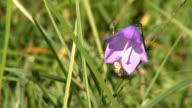HD Flower video