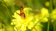 Flower with a butterfly video