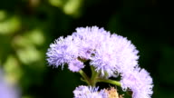 flower with bee video
