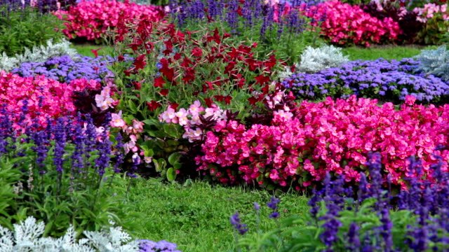 Flowerbed with different flowers video