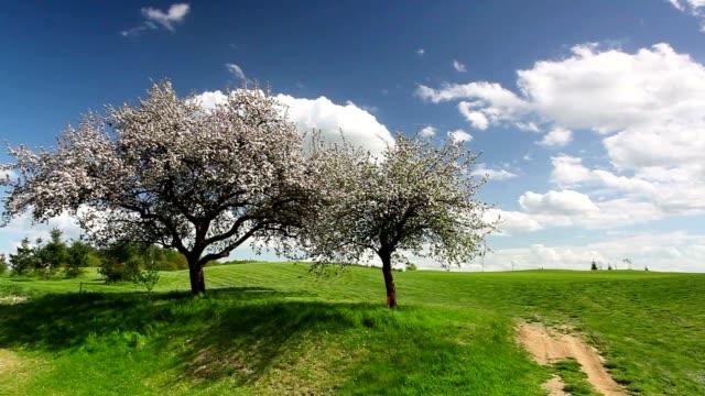 Flowering trees in the wind video
