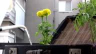 Flowerpot video