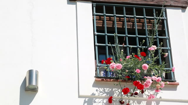 Flowerpots And Colorful Flowers On A White Wall In Granada video