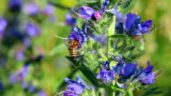 flowers and bees - close up video
