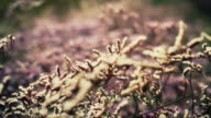 Flowers and field plants shaken by the wind video