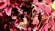 Flowers and insects. video