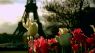 Flowers and the Eiffel Tower in Paris, France. video