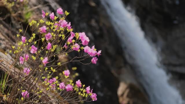 Flowers and waterfall in Seoraksan National Park, South Korea video