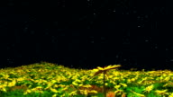 flowers at night video