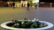 Flowers at shopping mall at spring in Krivoy Rog video