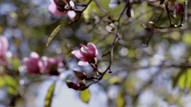 Flowers blooming close up video