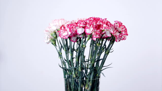 Flowers, bouquet, rotation, floral composition consists of Gently light pink turkish Carnation video