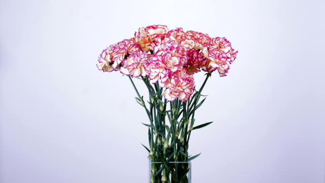 Flowers, bouquet, rotation on white background, floral composition consists of Carnation turkish Peach color video
