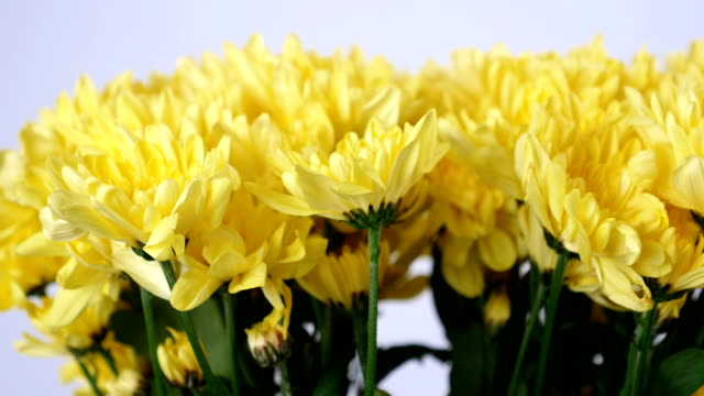 Flowers, bouquet, rotation on white background, floral composition consists of yellow Chrysanthemum Chamomile video
