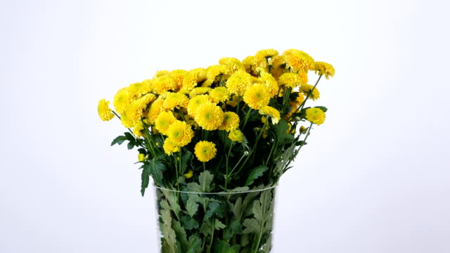 Flowers, bouquet, rotation on white background, floral composition consists of yellow Chrysanthemum santini video