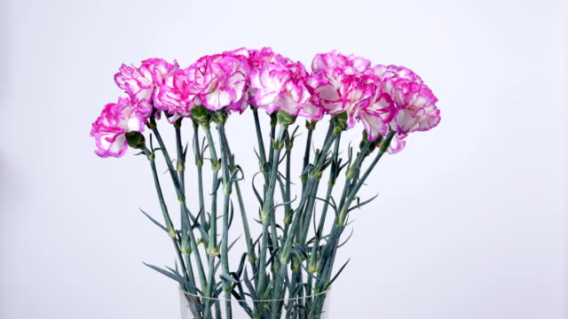 Flowers, bouquet, rotation on white background, floral composition consists of Bright purple turkish Carnation video