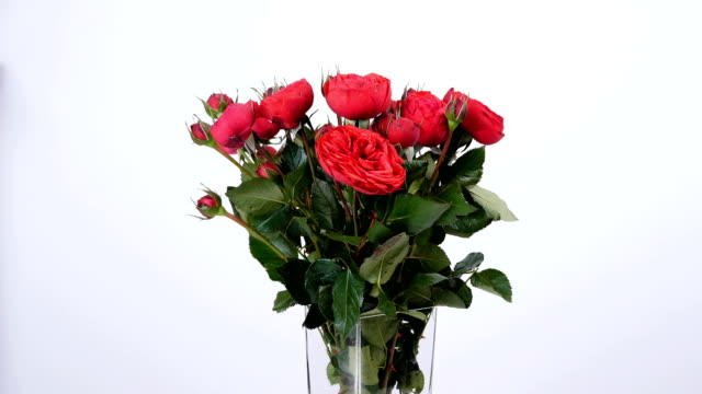 Flowers, bouquet, rotation on white background, floral composition consists of Roses pion-shaped bordeaux video
