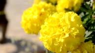 Flowers, bumblebee video