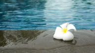 flowers floating in the pool  beach lounge video